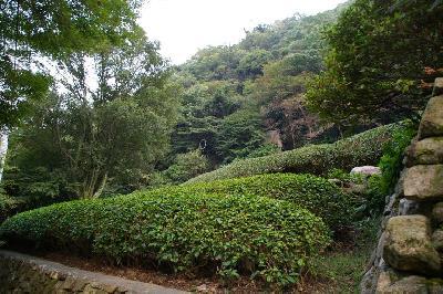静香園の茶畑