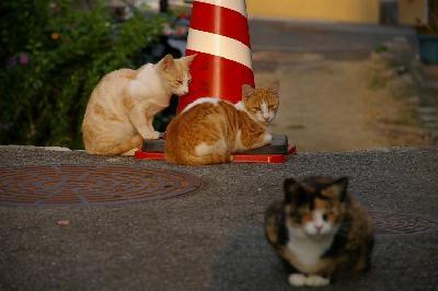 猫が集まる赤いコーン?