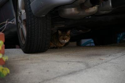 赤松町の猫。かなり警戒中?