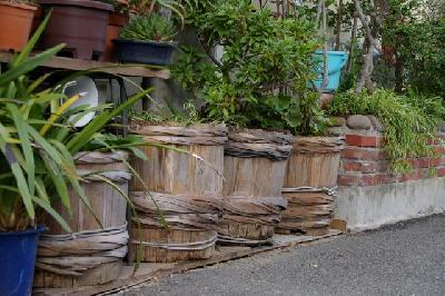 樽育ちの植木だけに、味がある?