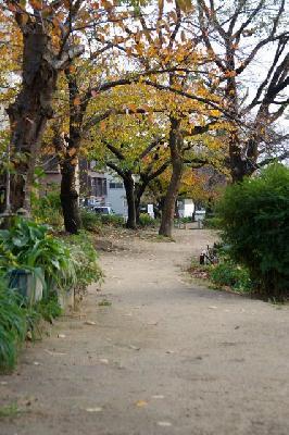 西郷川沿いの公園。こちらは晩秋の雰囲気。
