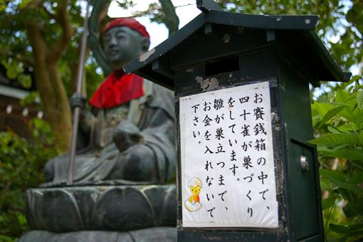 天上寺 四十雀の巣